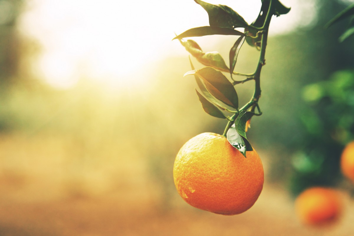 Citrus Research & Development Foundation case study image