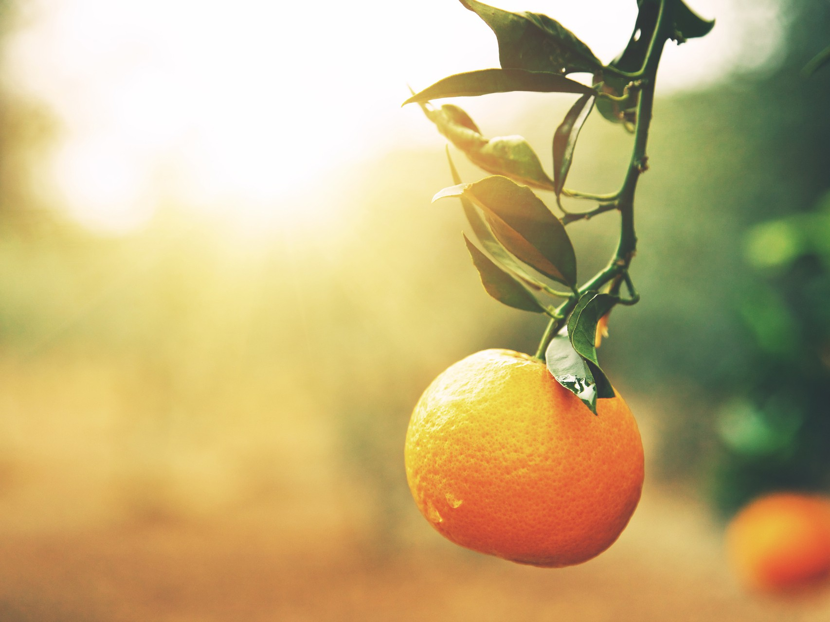 About Citrus Research & Development Foundation Sidebar Image