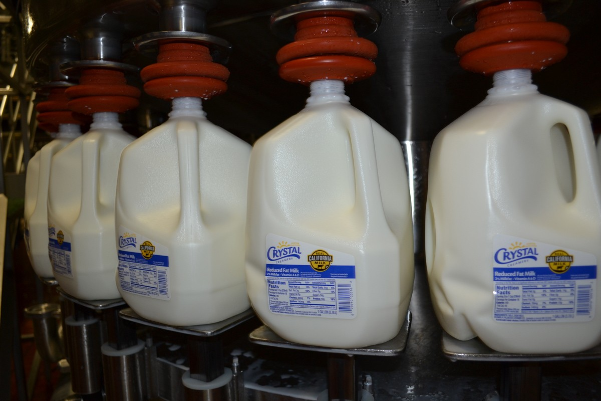 Milk production line. Gallon of milk.